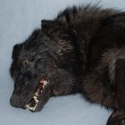 Soft Stuffed Black Timber Wolf