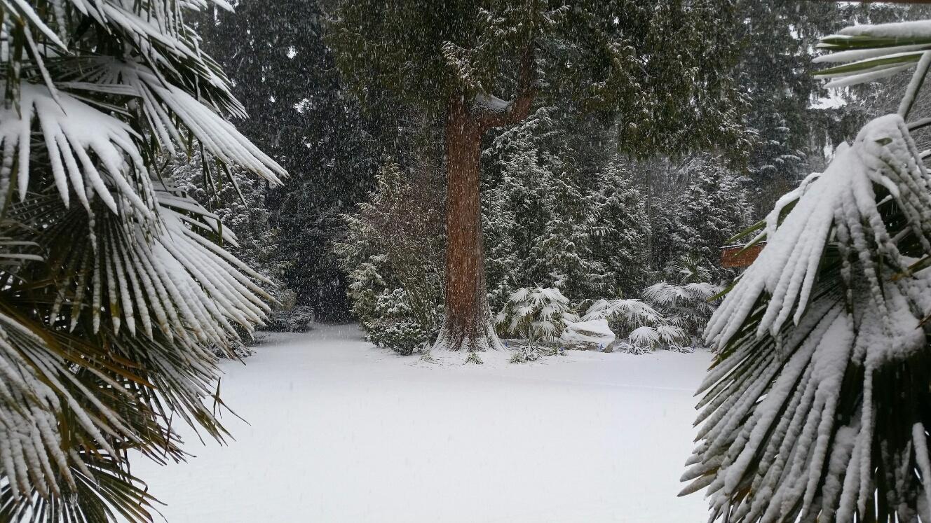 Snow Day ... Closing At Noon