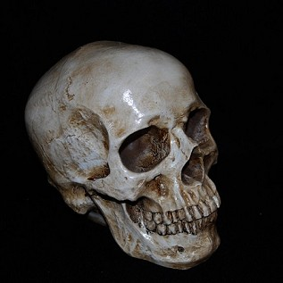Realistic Aged Human Skull
