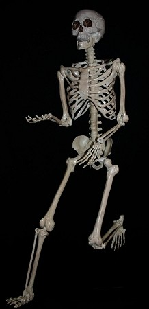 "5' 6"" Pose and Hold Plastic Skeleton"