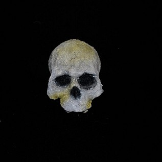 Decaying Jawless Resin Skull