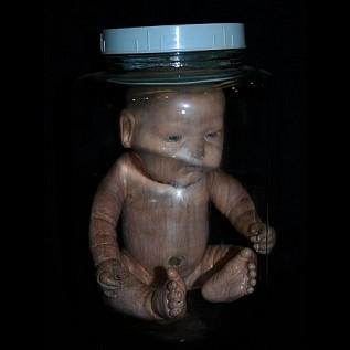 Human Fetus Lab Specimen Daily Rental